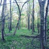 Frühlings-Ansicht von Forest Nature Green Path Stockfotos