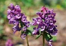 Frühlings-April-Blumen Lizenzfreies Stockbild