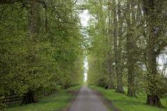 Frühlings-Bäume Stockfotografie