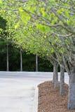 Frühlings-Baum Stockbild