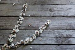 Frühlings-Blüte über hölzernem Hintergrund Lizenzfreies Stockfoto