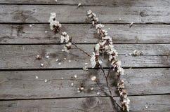 Frühlings-Blüte über hölzernem Hintergrund Stockfotografie
