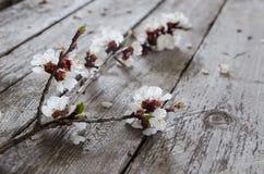 Frühlings-Blüte über hölzernem Hintergrund Lizenzfreie Stockfotografie