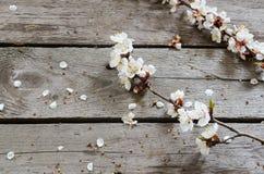 Frühlings-Blüte über hölzernem Hintergrund Lizenzfreie Stockfotos