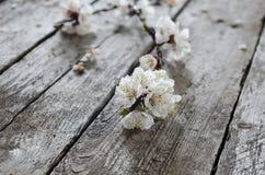 Frühlings-Blüte über hölzernem Hintergrund Stockbild