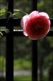 Frühlings-Blüte Stockfotos