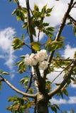Frühlings-Blüte Stockbilder