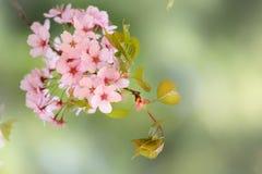 Frühlings-Blüte Stockfoto