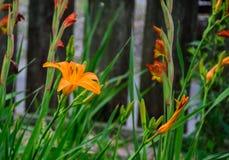 Frühlings-Blüten wachsen in einem Louisiana-Garten lizenzfreie stockbilder