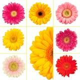 Frühlings-Blume Lizenzfreies Stockbild