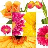 Frühlings-Blume Stockfotos