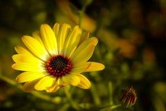 Frühlings-Blume stockbild