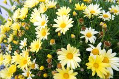 Frühlings-Blumen 1 lizenzfreie stockfotografie