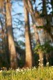 Frühlings-Blumen Stockfotos