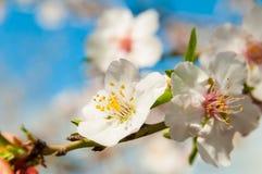 Frühlings-Blumen lizenzfreie stockbilder