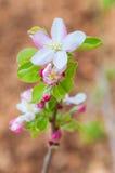 Frühlings-Blumen stockfotografie