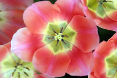 Frühlings-Blumen Lizenzfreies Stockfoto