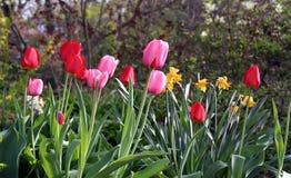 Frühlings-Blumen Lizenzfreies Stockbild