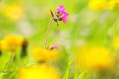 Frühlings-Blumen Lizenzfreie Stockfotografie