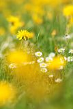 Frühlings-Blumen Stockfoto
