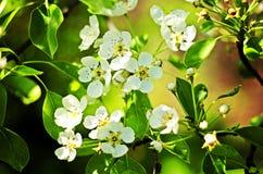 Frühlings-Blumen-Anordnung Stockfoto