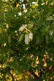 Frühlings-Blumen auf einem Baum Stockfoto