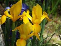 Frühlings-Blumen-Blühen Stockbild