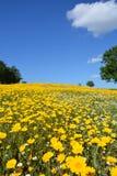 Frühlings-Blumen in der Türkei Stockfoto