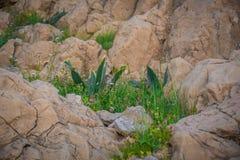 Frühlings-Blumen in der Wüste Lizenzfreie Stockfotografie
