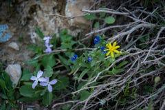 Frühlings-Blumen in der Wüste Lizenzfreie Stockfotos