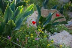 Frühlings-Blumen in der Wüste Stockbild