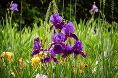 Frühlings-Blumen-Garten lizenzfreies stockbild