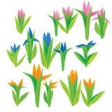 Frühlings-Blumen-Set Lizenzfreie Stockfotografie