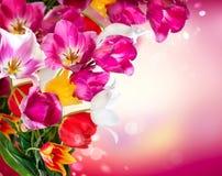 Frühlings-Tulpen stockfoto