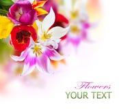 Frühlings-Tulpen Stockfotos
