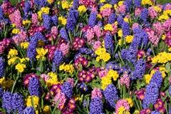 Frühlings-Blumenbildschirmanzeige. Stockfoto