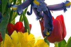 Frühlings-Blumenstrauß Lizenzfreie Stockfotografie