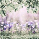 Frühlings-Blumenweinlese-Wiese Stockbild