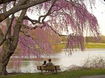 Frühlings-Bremse Stockfotografie