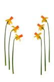 Frühlings-Durchläufe Lizenzfreies Stockfoto