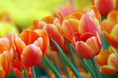 Frühlings-Fühler Stockbilder