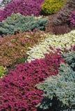 Frühlings-Farbe Stockfoto