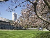 Frühlings-Farbe in Niagara-Fall ontario kanada Lizenzfreies Stockbild