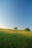 Frühlings-Feld Stockbilder