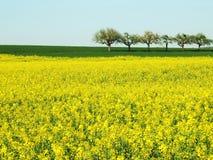 Frühlings-Feld mit Bäumen Lizenzfreie Stockfotos