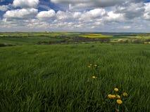 Frühlings-Felder Stockbild