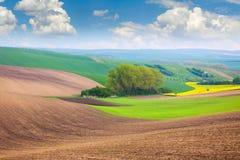 Frühlings-Felder und Himmel-Hintergrund - schöne Naturlandschaft lizenzfreies stockbild