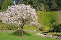 Frühlings-Garten Lizenzfreie Stockbilder