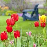 Frühlings-Garten Lizenzfreies Stockfoto
