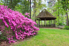 Frühlings-Garten-Azaleen Lizenzfreie Stockfotos
